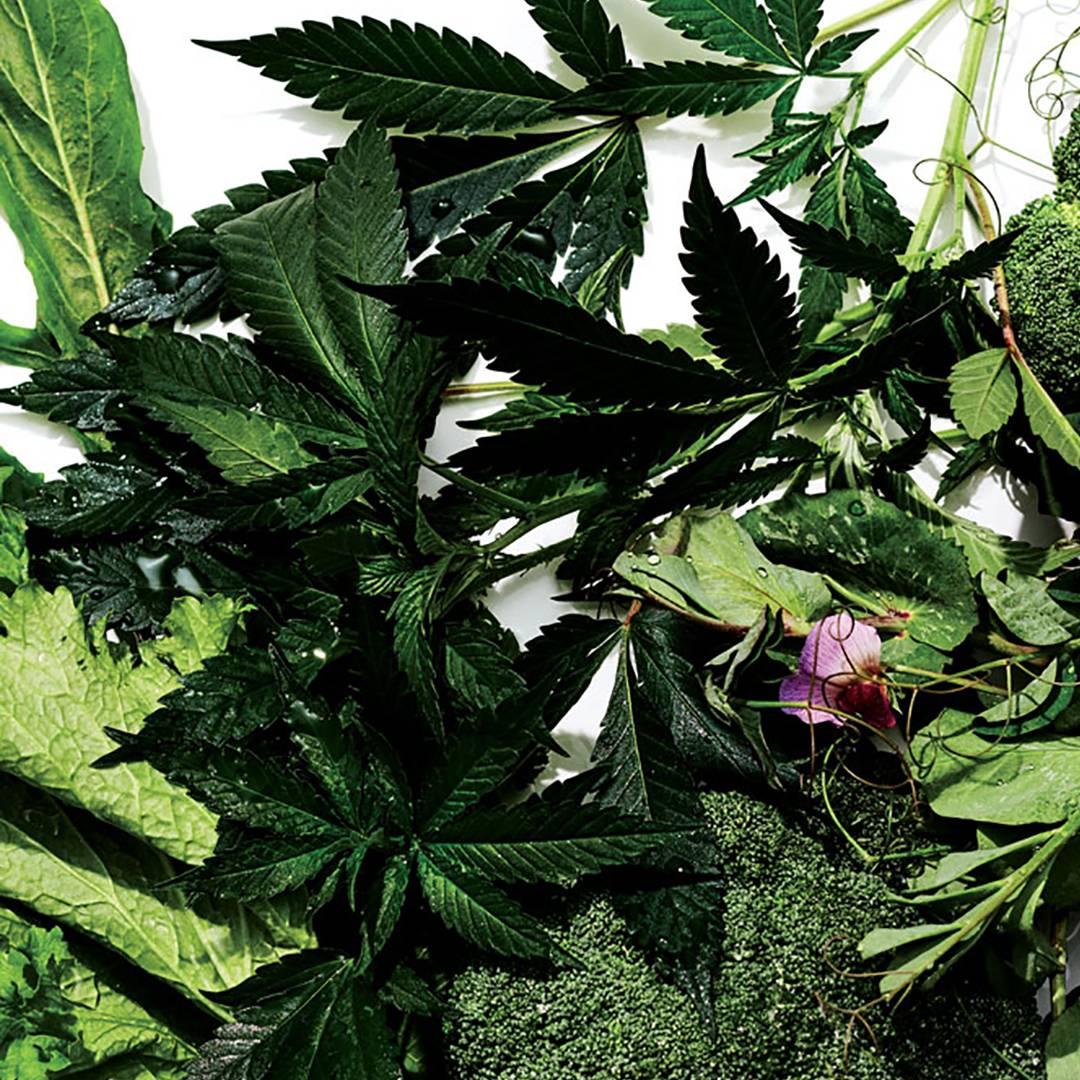 Raw Cannabis