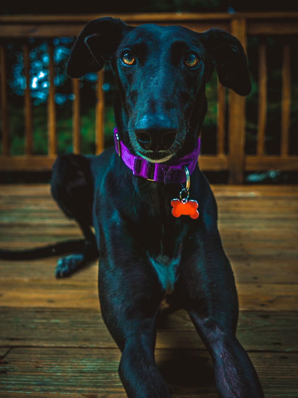 CBD for pet seizures